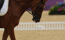 equitazione_17